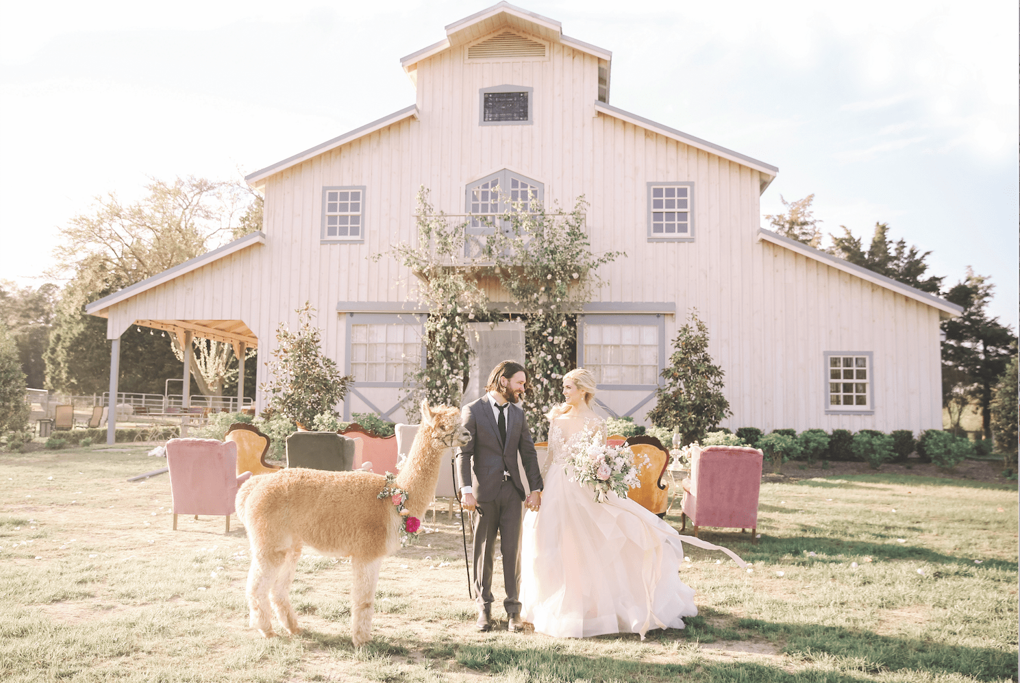 NJ-alpaca-weddings-Kay-English-Photography